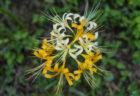 公渕森林公園にヒガンバナが咲いていた。