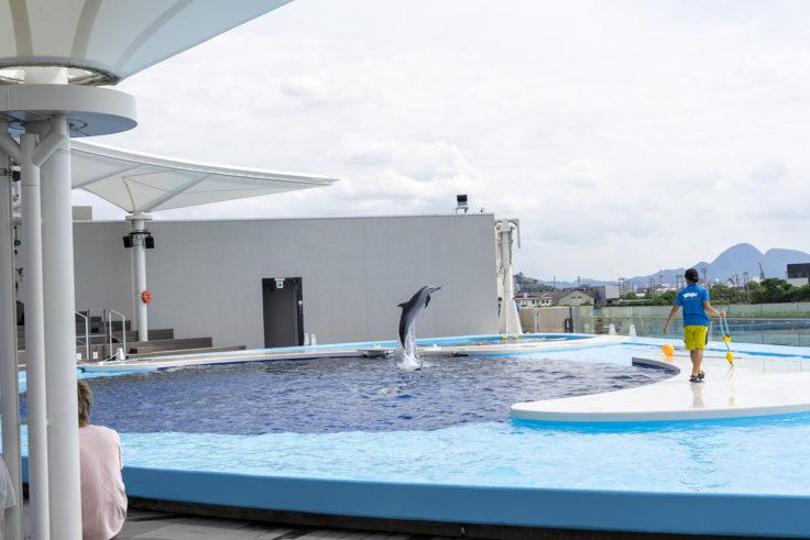 四国水族館海豚プール