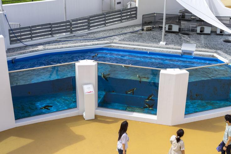 四国水族館のペンギン