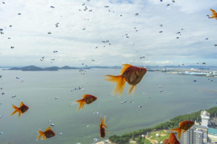 ゴールドタワー空飛ぶ金魚