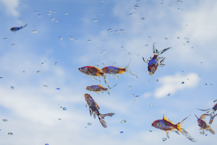 ゴールドタワー空飛ぶ金魚3