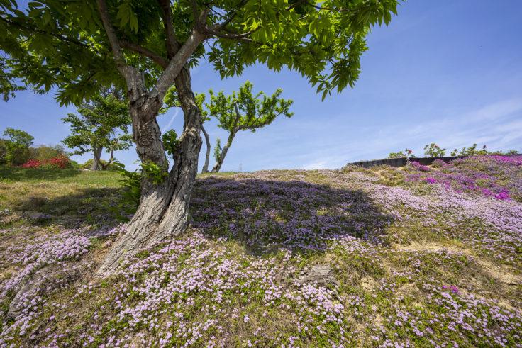 芝桜富士頂上までの道のり