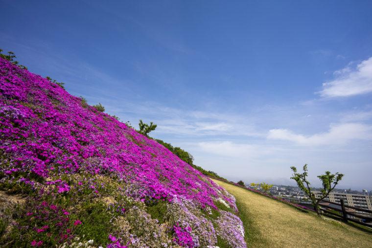 芝桜富士頂上までの道のり2