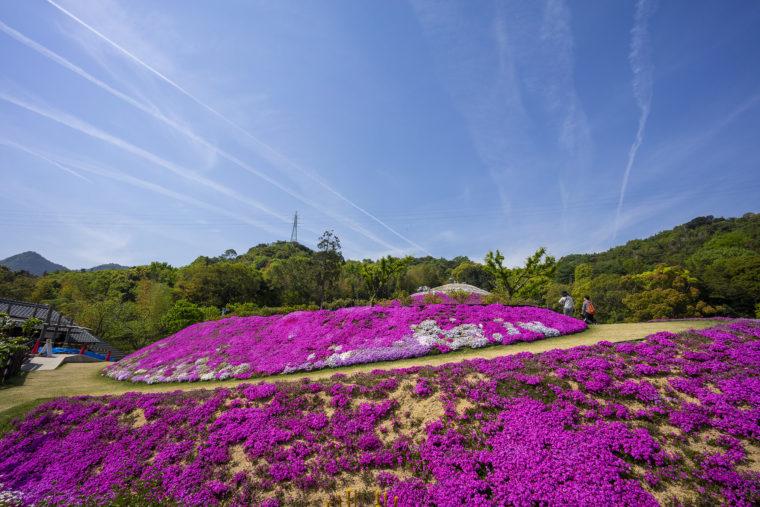 芝桜富士頂上までの道のり3