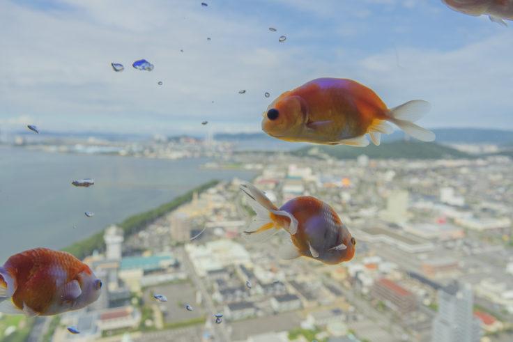 ゴールドタワー空飛ぶ金魚2