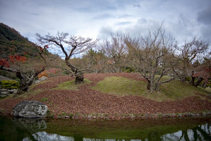 楓が散った楓嶼