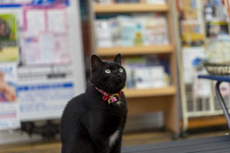 見上げる猫3