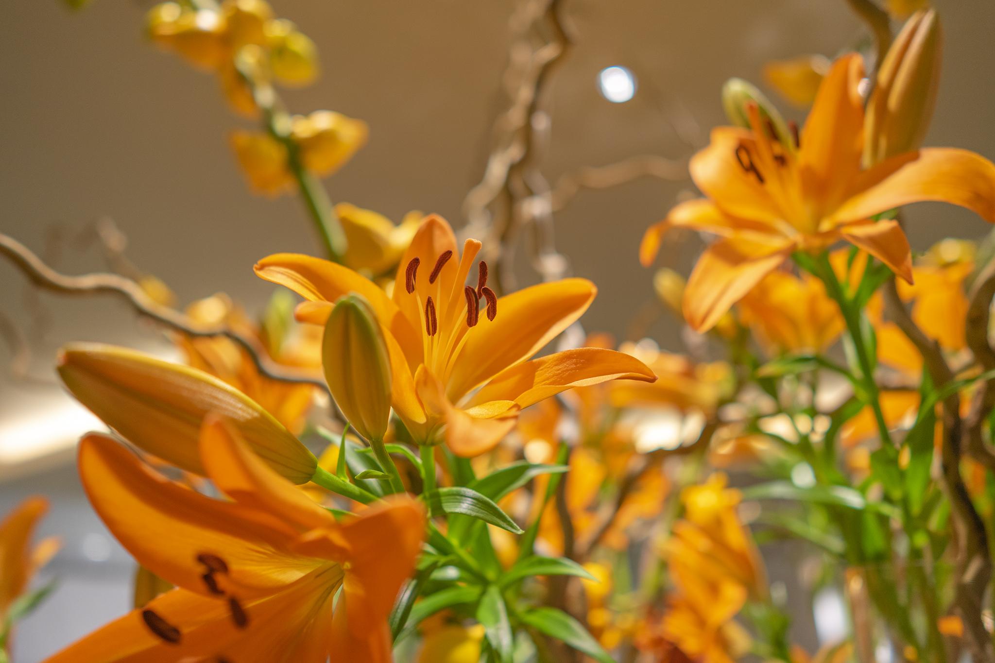 スカシユリの花言葉と誕生花