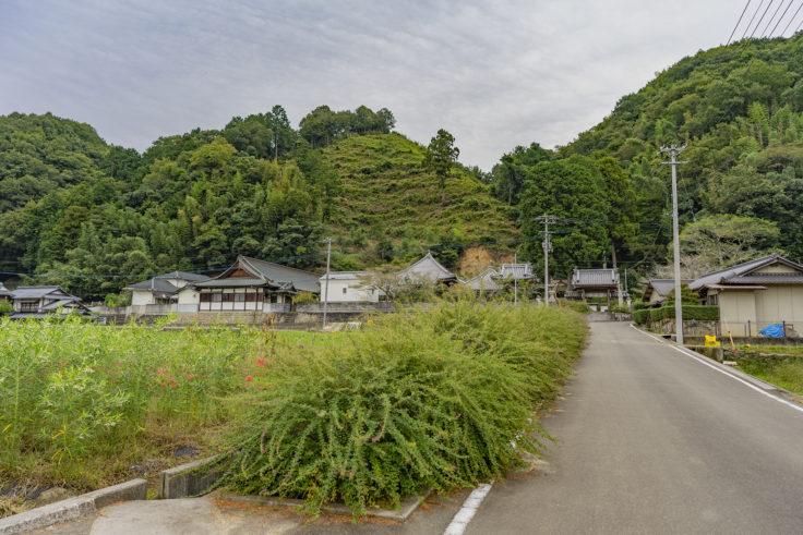 最明寺参道のハギ