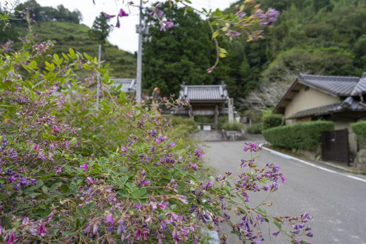 最明寺参道のハギと門