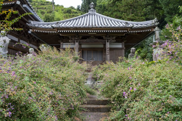 西明寺のハギ2