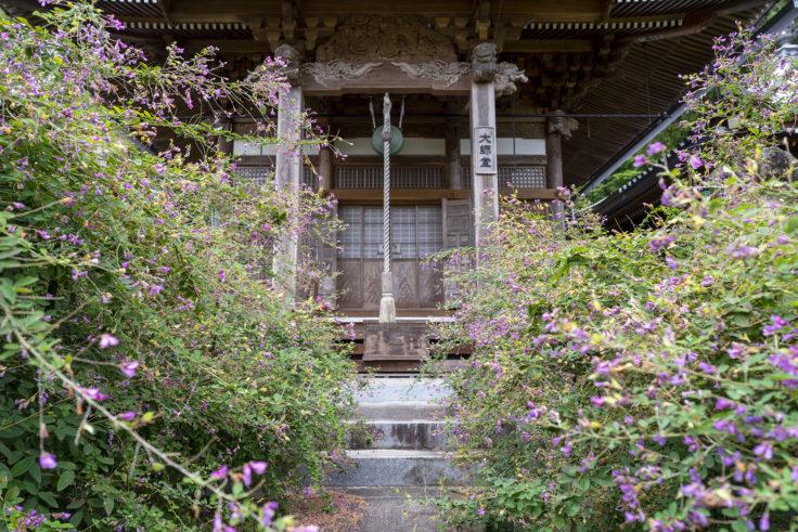 最明寺境内のハギ5