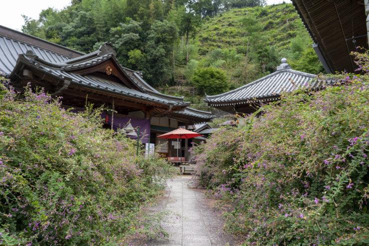 最明寺境内のハギ6