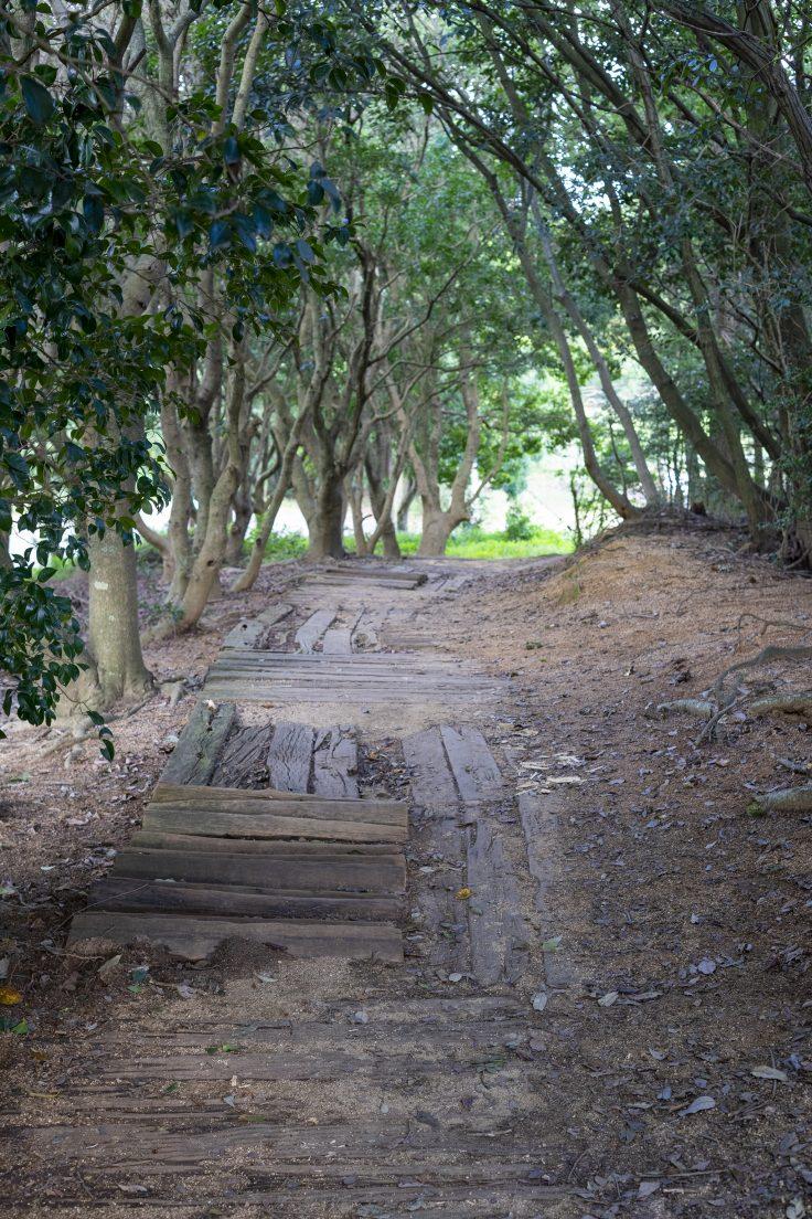 みろく自然公園の小径