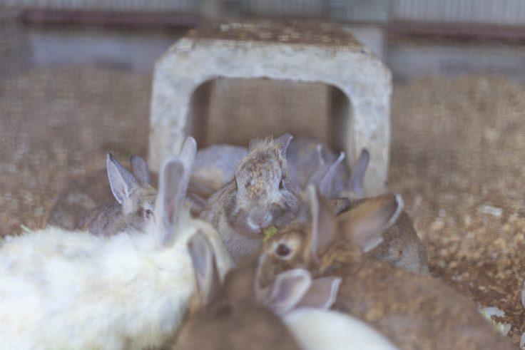 みろく自然公園のウサギ