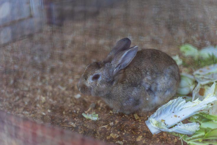 みろく自然公園のウサギ2