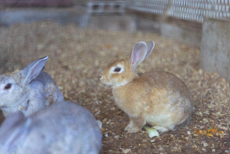 みろく自然公園のウサギ3