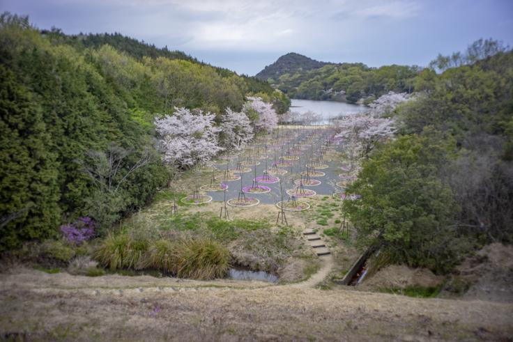 桜の迷宮の桜