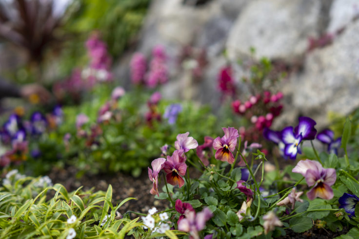 神戸異人館街の花