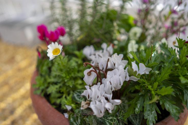 神戸異人館街ラインの館庭の花