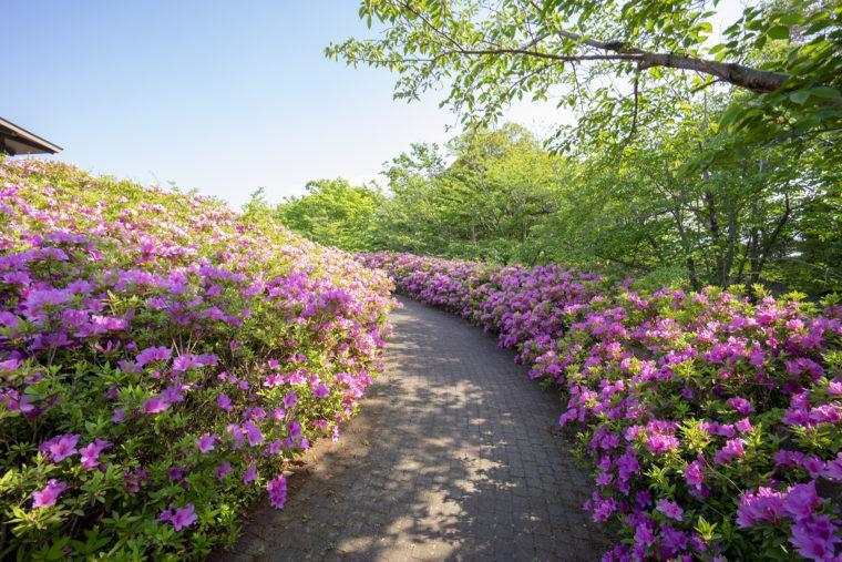 仏生山公園のツツジの回廊