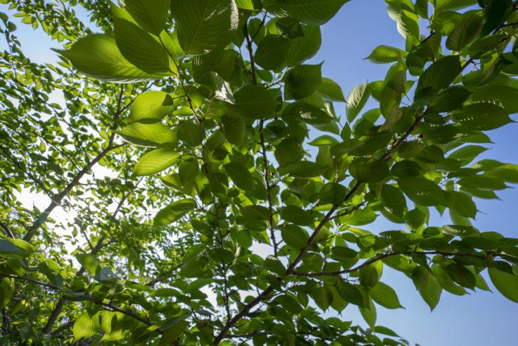 仏生山公園の木