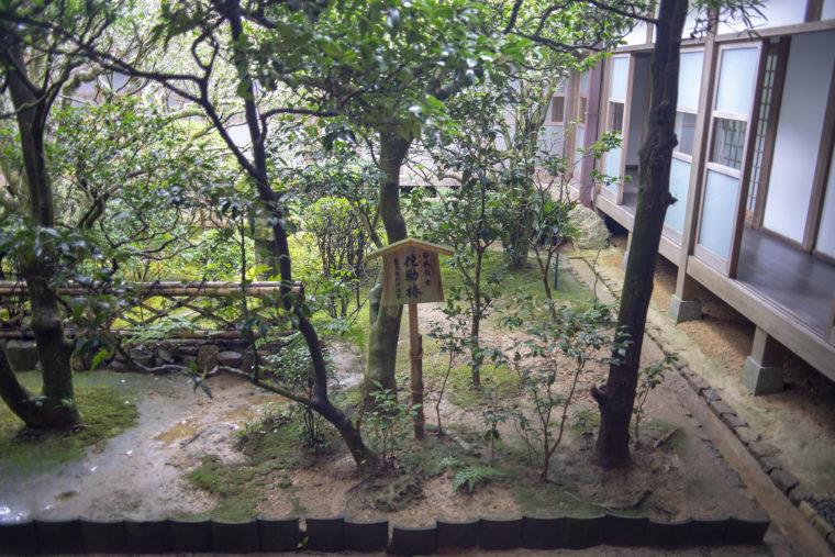 龍安寺の侘助椿