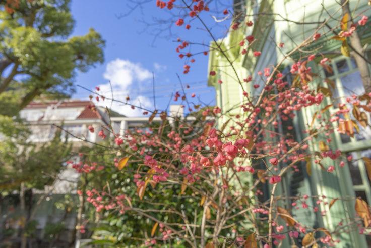 神戸異人館街萌黄の館裏側に咲く花