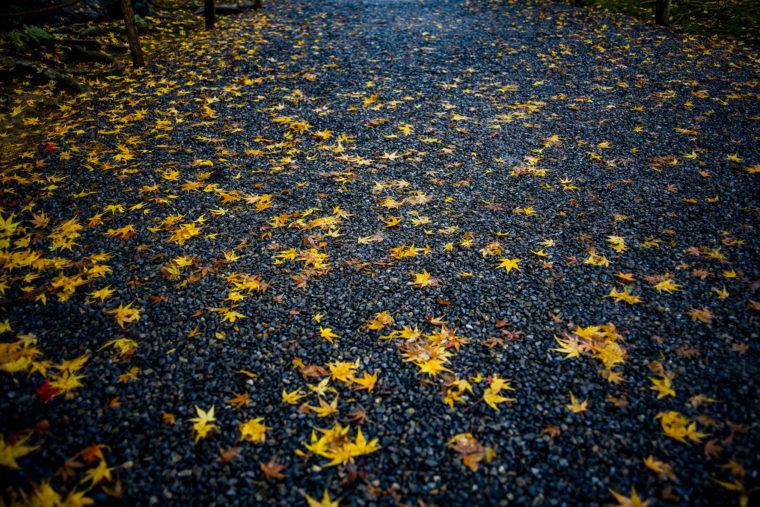 龍安寺の紅葉落ち葉