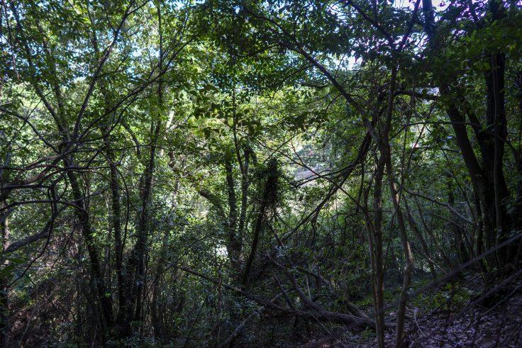紫雲山登山道3