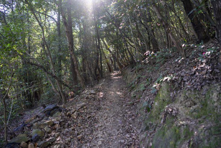 紫雲山登山道6