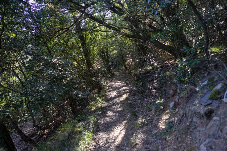 紫雲山登山道8