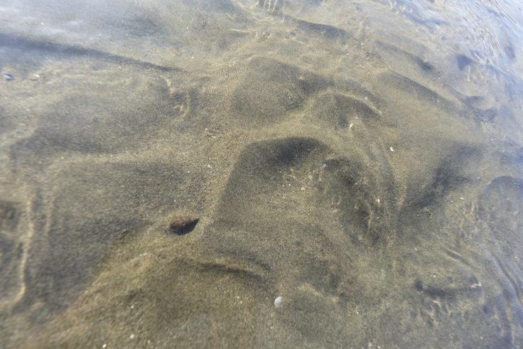 父母ヶ浜のヤドカリ