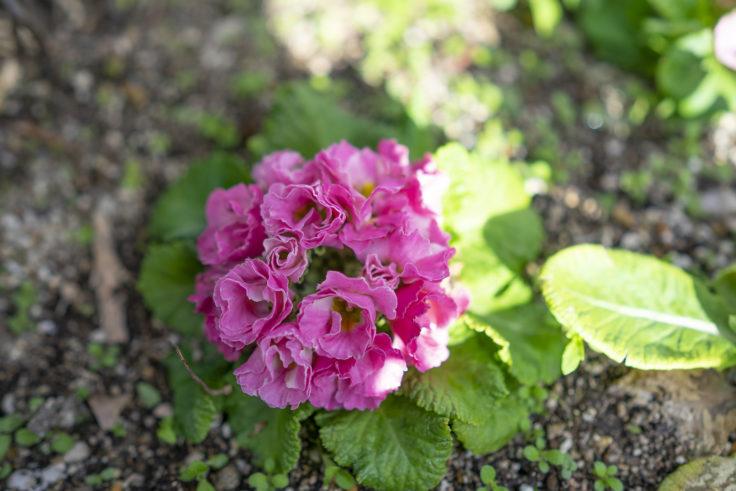北野町に咲く花