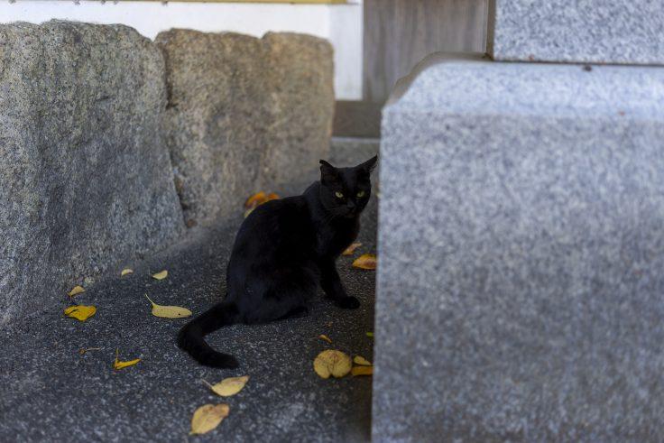 真行寺にいた猫