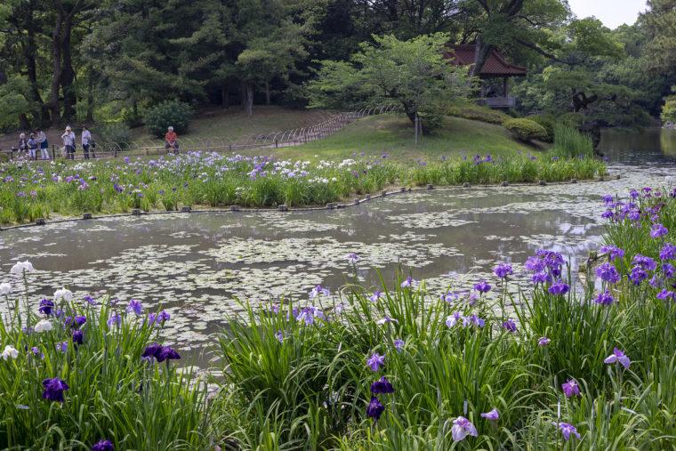花しょうぶ園から見た瞰鴨閣