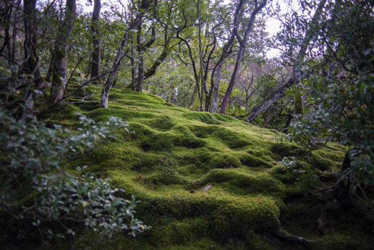 慈照寺の苔