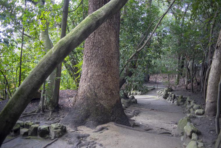 平安神宮神苑の道