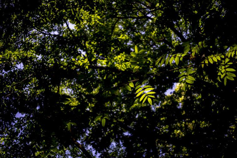 けぼ山で森林浴