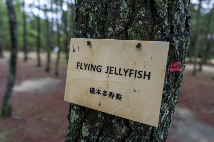 「Flying Jellyfish」植本 多寿美