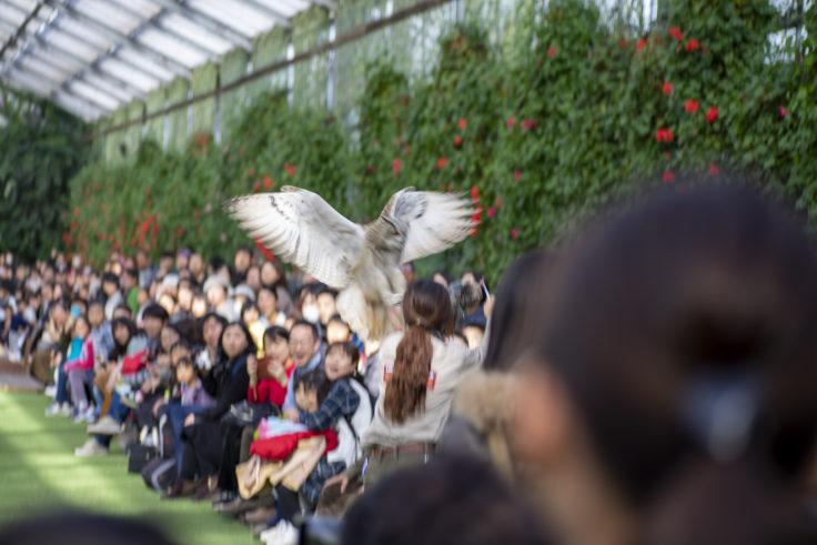 神戸どうぶつ王国バードパフォーマンスショー
