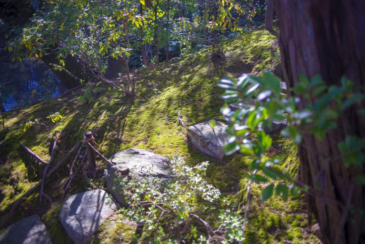 桂離宮の苔2