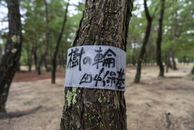 「樹の 輪」田中保基