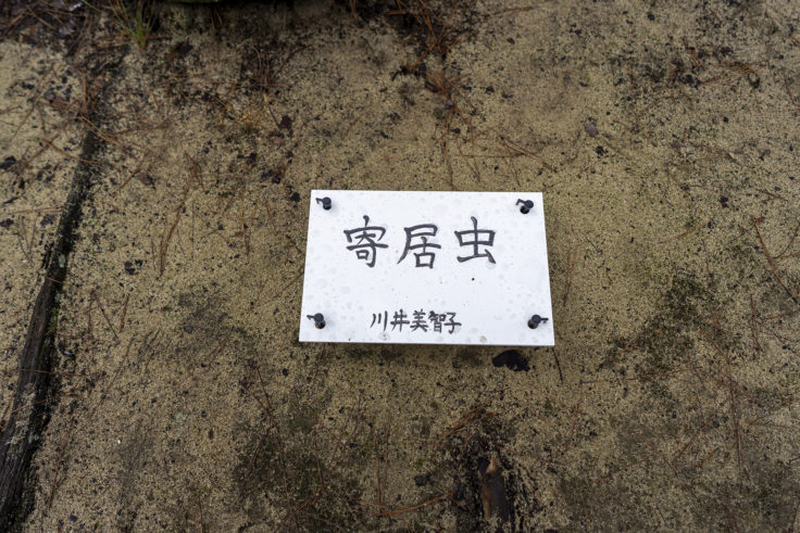「寄居虫(ヤドカリ)」川井 美智子
