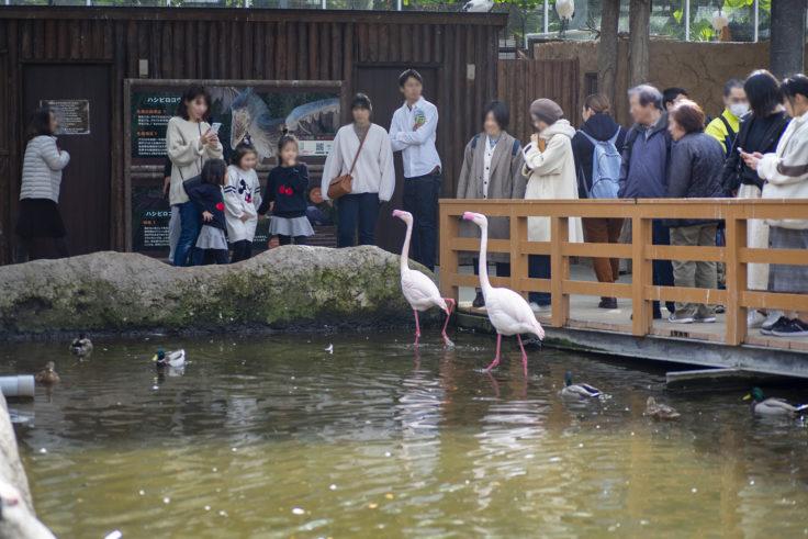 神戸どうぶつ王国のヨーロッパフラミンゴ2