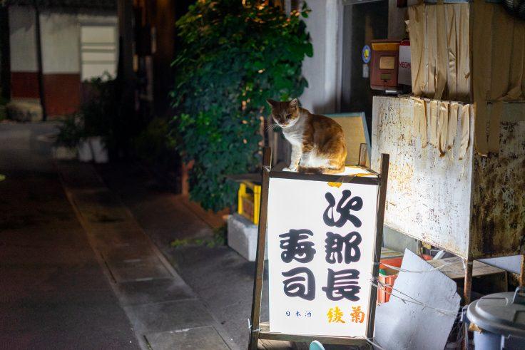 坂出市の猫