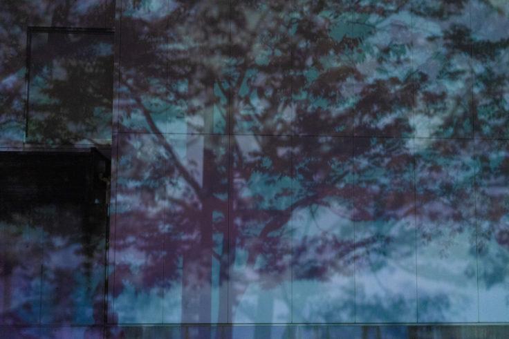 夜の木の影