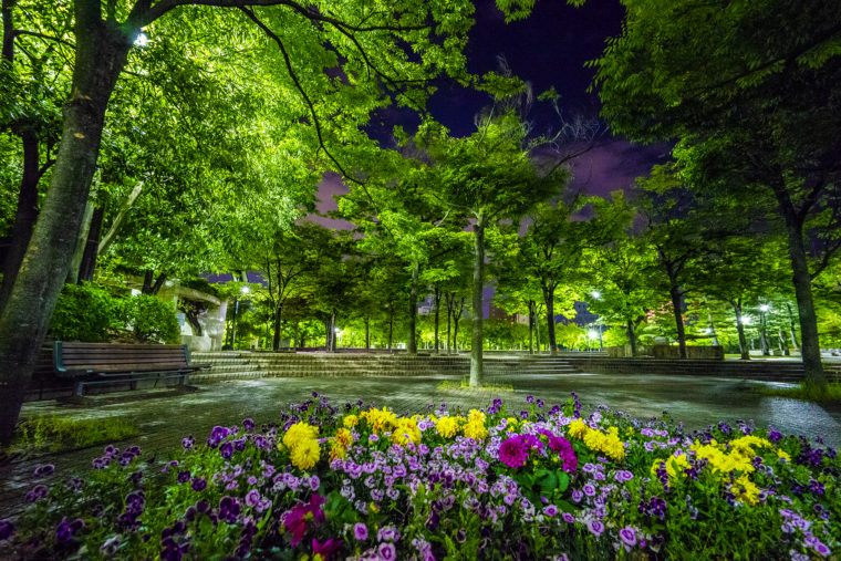 高松中央公園の夜