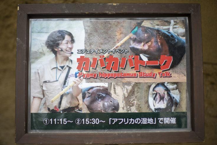 神戸どうぶつ王国のコビトカバイベント