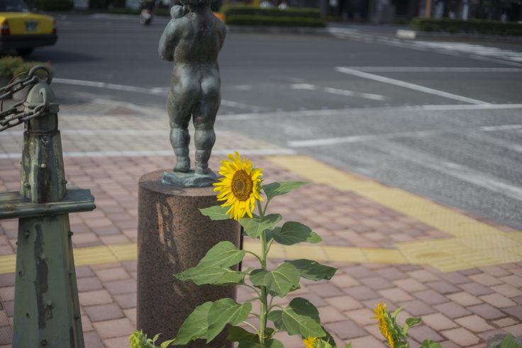 西川緑道公園のヒマワリ